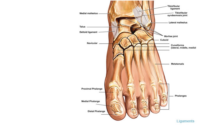 Diabetic Foot Diagram